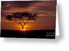 Dawn On The Masai Mara Greeting Card