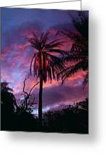 Dawn Palm 03 Greeting Card