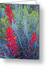 Dawns Impressionistic Paintbrush Greeting Card