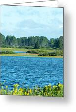 Day At The Wetlands Greeting Card