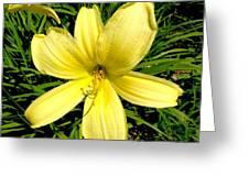 Day Daisy Greeting Card