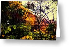 Day In The Woods  Greeting Card