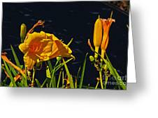 Day Lilies, Dark, Background Greeting Card