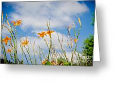Day Lilies Look To The Sky Greeting Card