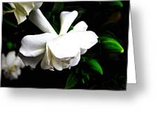 Day Lillie  Greeting Card