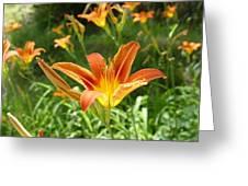 Day Lillies - Standing Tall Greeting Card by Murtaza Humayun Saeed