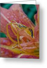 Day Lilly Stamens 1a Greeting Card
