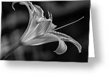 Day Lily 2 Bw Greeting Card