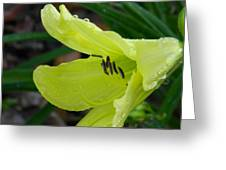 Day Lily And Raindrops Closeup Greeting Card