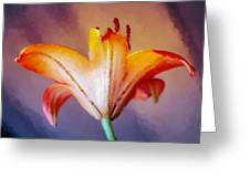 Day Lily Back Greeting Card