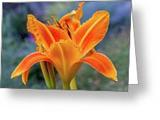 Day Lily Bright Greeting Card