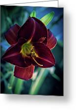 Day Lily Dark Greeting Card