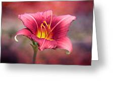 Day Lily Deep Greeting Card