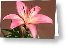 Day Lily In Front Yard Greeting Card