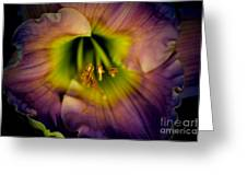 Day Lily In Purple Greeting Card