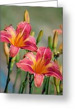 Day Lily Twins Greeting Card