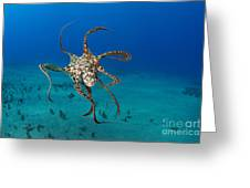 Day Octopus Greeting Card
