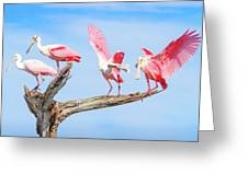 Day Of The Spoonbill  Greeting Card