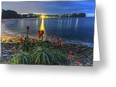 Daybreak And Cloudy Seascape And Aloe Vera Greeting Card