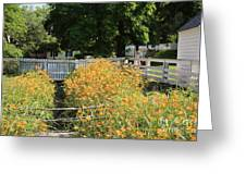 Daylilies In The Spring Greeting Card