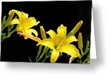 Daylilies Greeting Card