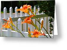 Daylilies On Picket Fence Greeting Card