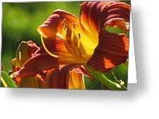 Dayliliy Greeting Card