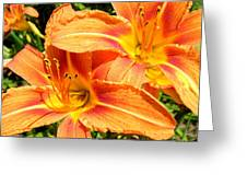 Daylillies In Bloom Greeting Card