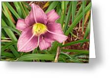 Daylilly Greeting Card