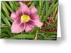 Daylilly Greeting Card