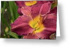 Daylily 2 Greeting Card