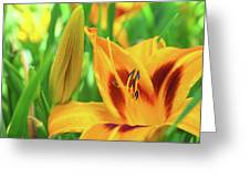 Daylily Bud And Bloom Greeting Card
