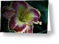 Daylily Collection # 13 Greeting Card