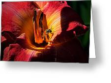 Daylily Collection # 19 Greeting Card