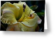 Daylily Collection # 5 Greeting Card