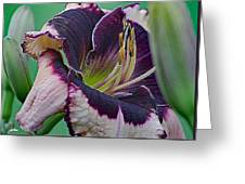Daylily Collection #12 Greeting Card