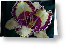 Daylily Collection #9 Greeting Card