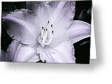 Daylily Flower With A Tint Of Purple Greeting Card