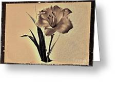 Daylily Of Old Greeting Card