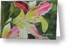 Daylily Study 1 Greeting Card