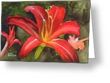 Daylily Study Iv Greeting Card