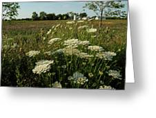 Days Of Queen Annes Lace Greeting Card