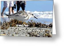 Daytona Beach Surf 001 Greeting Card