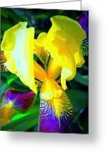 Dazzle In The Garden Sun Greeting Card