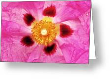 Dazzler Greeting Card
