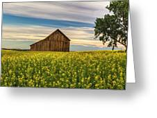 Dazzling Canola In Bloom Greeting Card