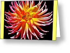 Dazzling Dahliia Greeting Card