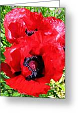 Dazzling Red Poppies Greeting Card