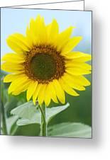 Dazzling Sunflower Greeting Card