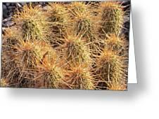 Dbg Cactus II Greeting Card
